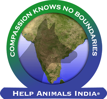 Help Animals India - Saving India's Forgotten Animals