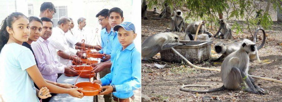 Spring news and highlights – Help Animals India - Saving
