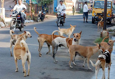 f030a6d17a73 Millions of stray dogs live on the streets of India. Most are direct  descendants of their feral canine ancestors, a