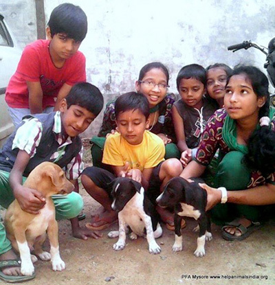 Saving India's Street Dogs – Help Animals India - Saving