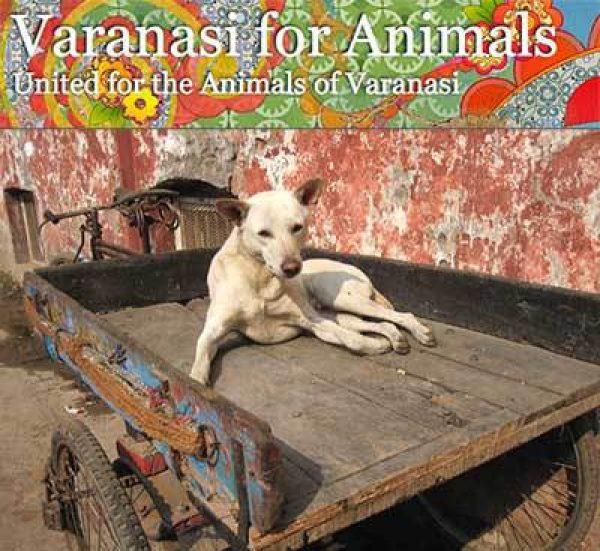Groups We Help – Help Animals India - Saving India's